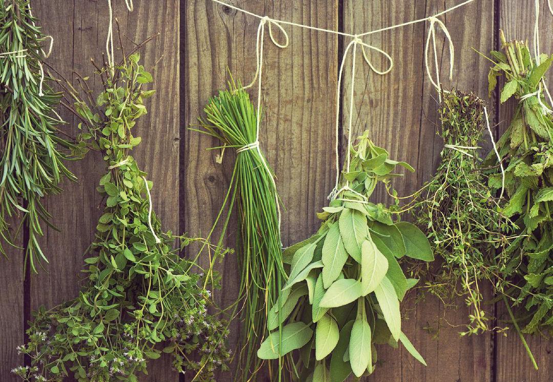 Le erbe essicate